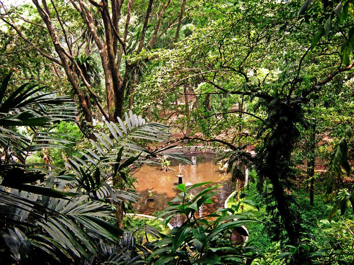 Portrait Of JavaBogor Botanical GardensView Of A Pond