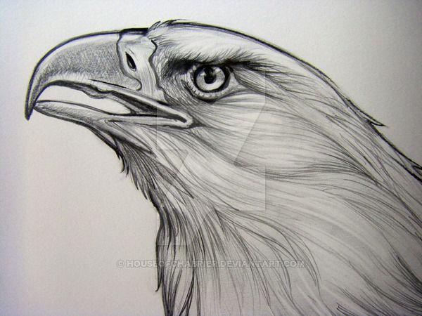 Bald eagle pencil detail 2 by houseofchabrier on deviantart