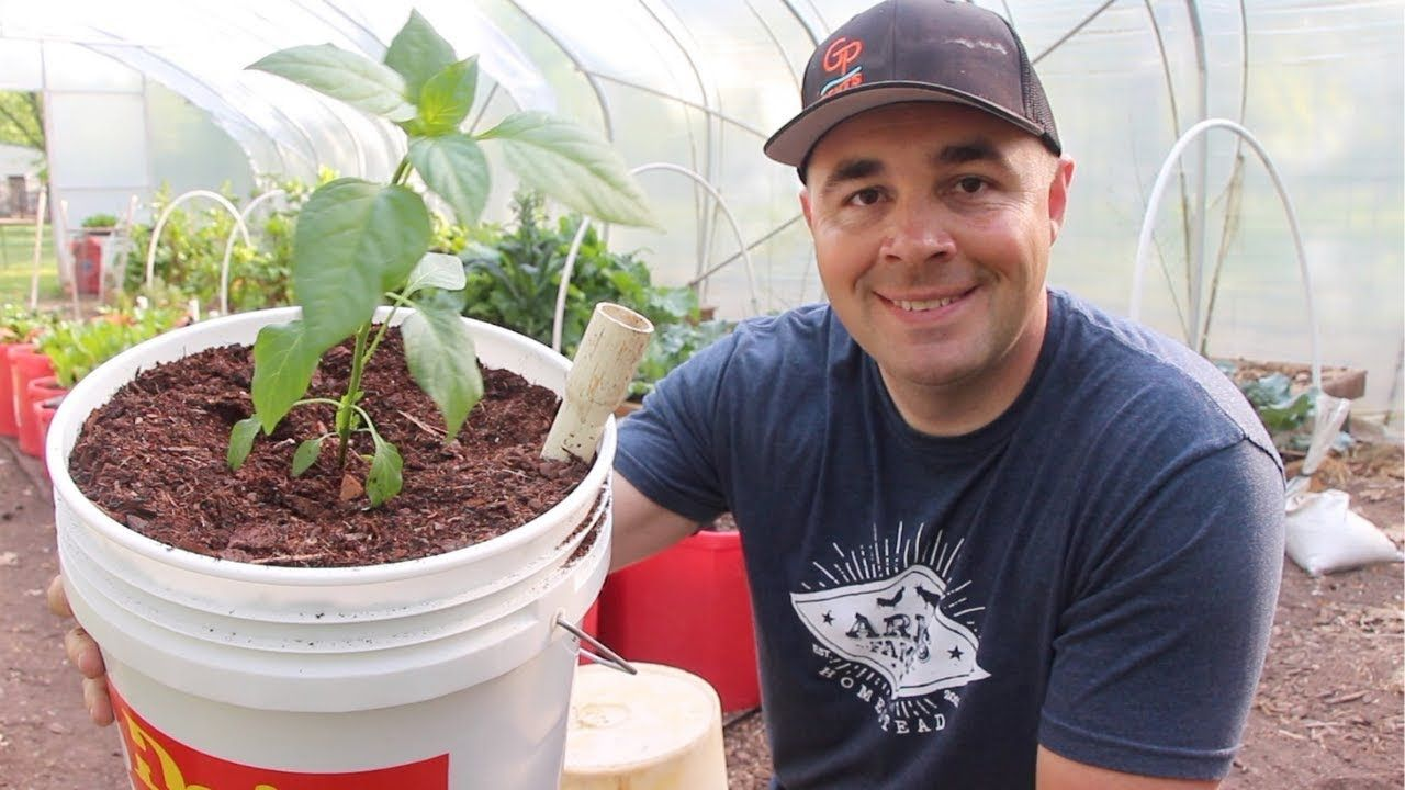 How to Build the BEST Self Wicking Bucket! DIY Self Watering 5 Gallon Bucket  - YouTube | Bucket gardening, Self watering, Self watering planter