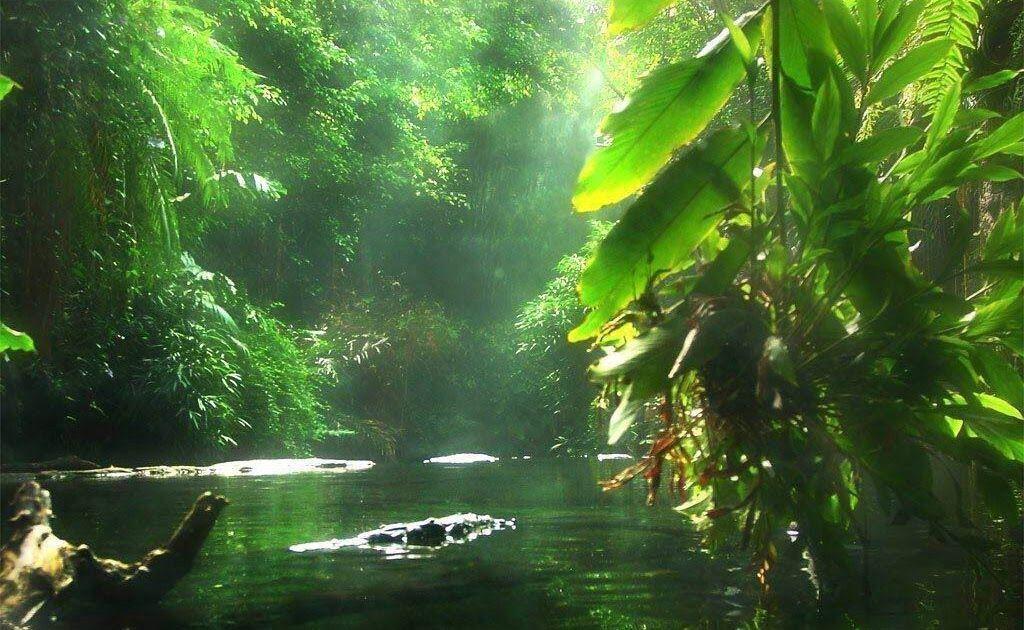 Gambar Lingkungan Alam Yang Indah Gambar Alam Nan Indah Gambar Lingkungan Alam Yang Indahhttp Pemandanganoce Blogspot Com 2017 1 Hutan Hujan Pemandangan Alam