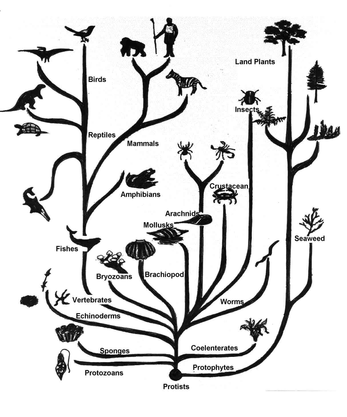 Tree Of Life Natural Selection Using Phet Simulation