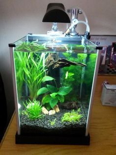 21 Best Aquascaping Design Ideas to Decor Your Aquarium ...