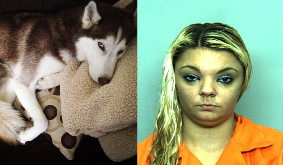 A 22 Year Old Virginia Beach Woman Was Arrested On Sunday After Fraudulently Taking A Lost Dog Listing It On Craigsli Losing A Dog Animal Activist Dog Stories