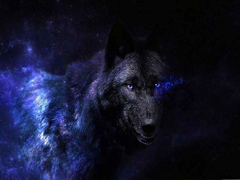Black Wolves With Blue Eyes Wallpapers Wolf Wallpapers Pro Animali Citazioni