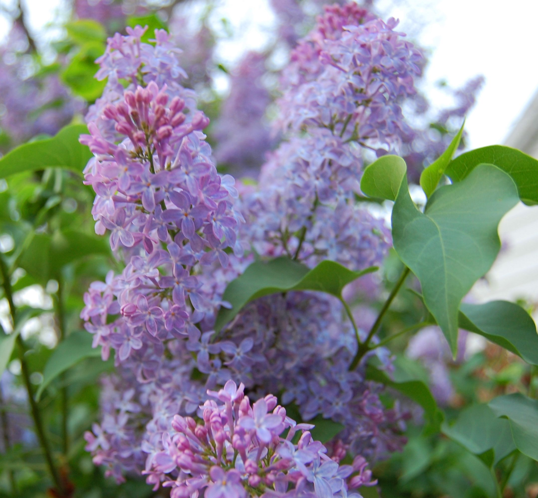 Pin by David Schwartz on My Indiana garden Plants, Bloom
