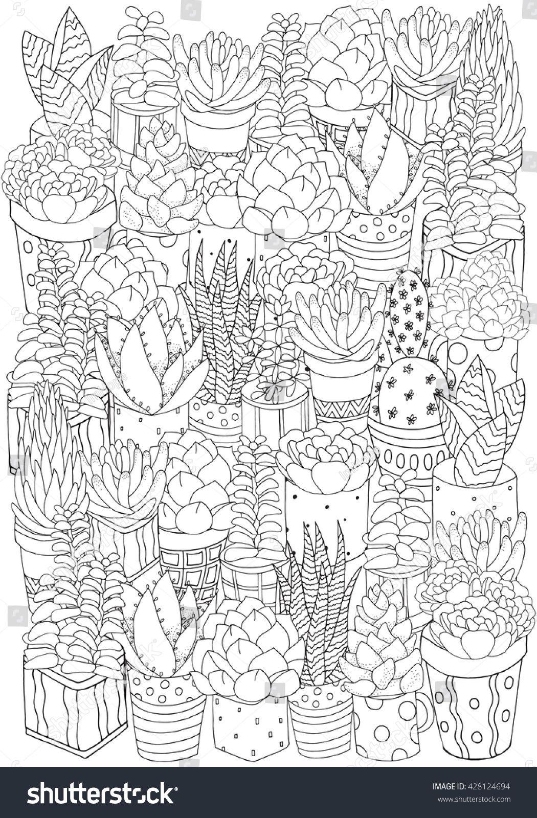 Hand Drawn Set Of Succulents Cactuses And Pots Doodles Elements