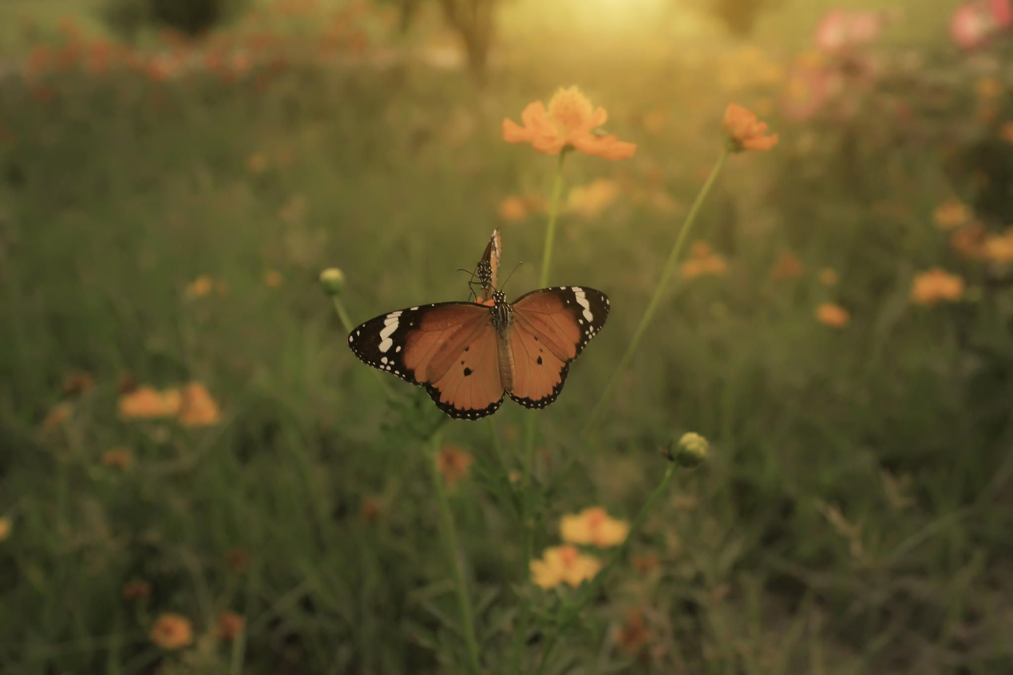 butterflies by Furqi Arts on 500px