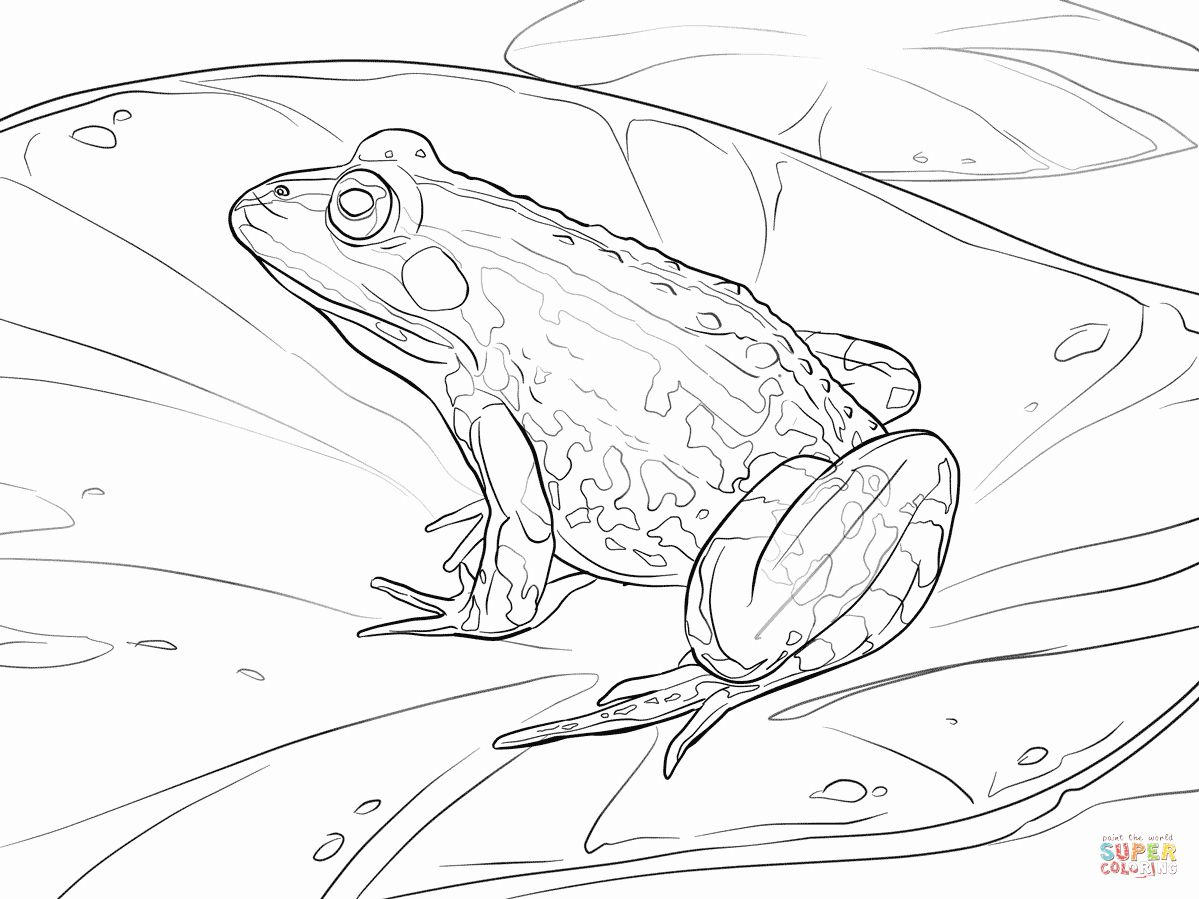 Cute Tree Frog And Mushrooms Coloring Page Coloring Pages Frog