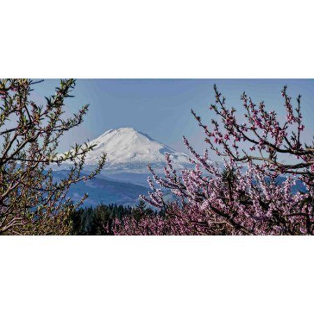Marmont Hill Mt. Adams in Spring Painting Print on Canvas, Multicolor