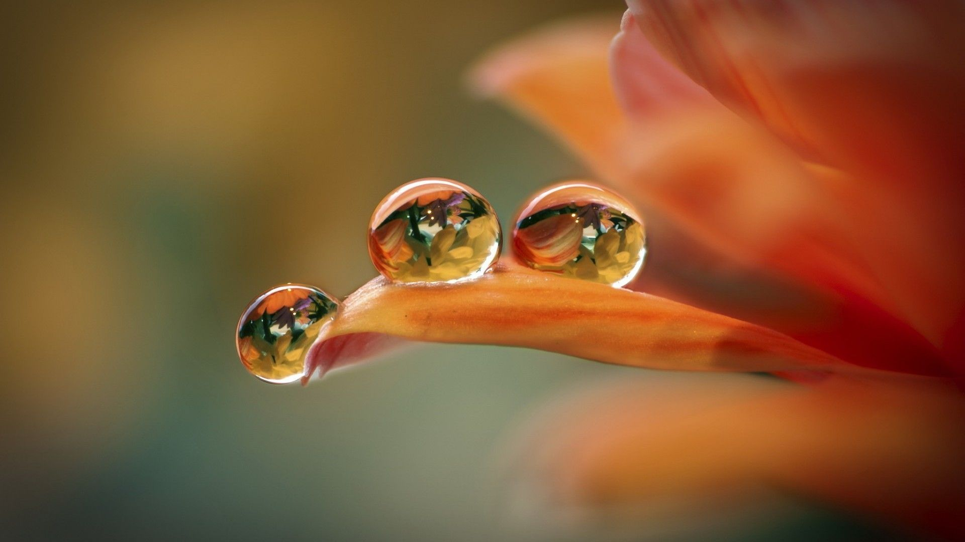 خلفيات جميلة للكمبيوتر Hd 2018 Wallpapers Tecnologis Nature Water No Rain No Flowers Water Drops