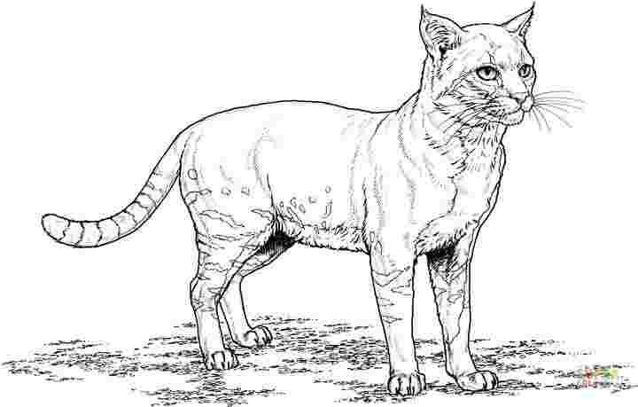 Best Printable Coloring Pages Of Real Cats 777 Amazing