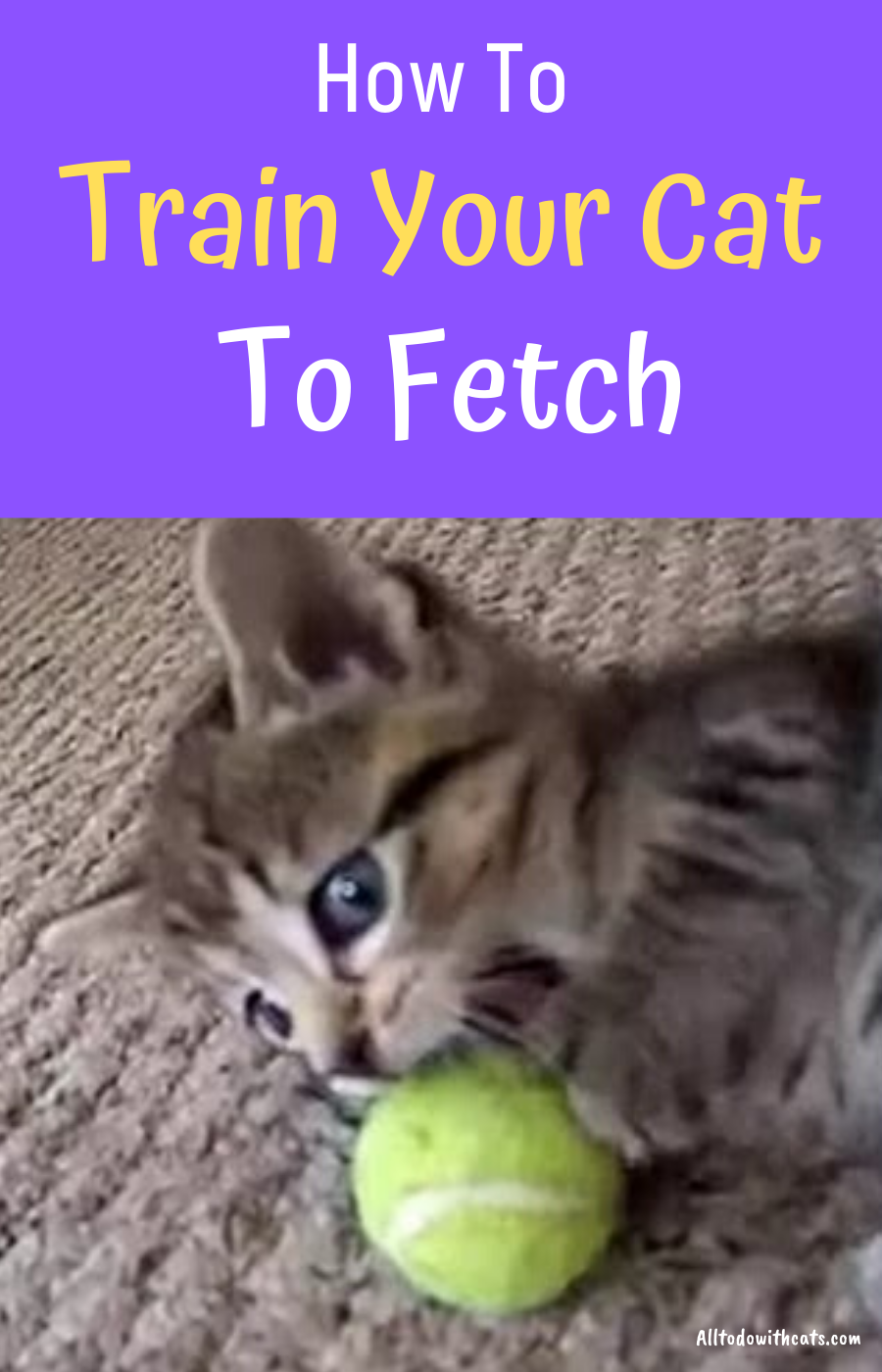 How To Train Your Cat To Fetch Like A Pro Proven Tips And Tricks In 2020 Cat Training Training A Kitten Cat Behavior