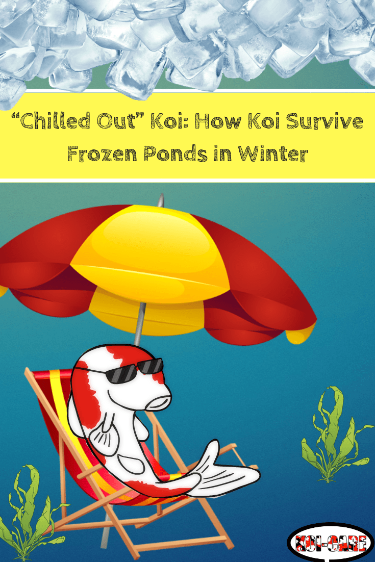 Chilled Out Koi How Koi Survive Frozen Ponds In Winter Koi Fish Pond Frozen Pond Ponds Backyard