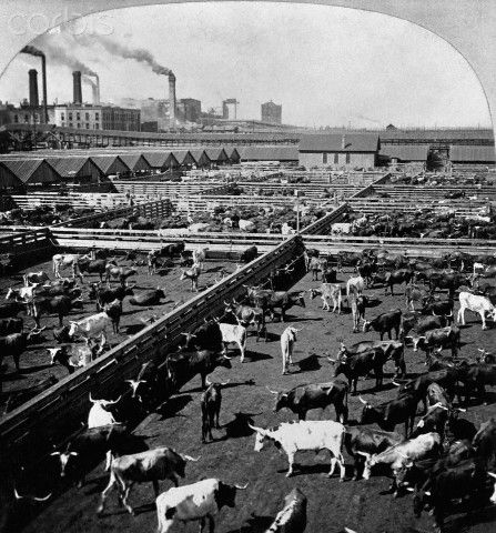 an analysis of the chicago meat industry in the jungle by upton sinclair After sinclair submitted an article to the socialist magazine appeal to reason on the failure of the chicago stockyards strike of 1904, appeal editor fred warren offered sinclair a five hundred dollar advance to investigate the meatpacking industry sinclair spent seven weeks working undercover in chicago's stockyards before writing the jungle using material he had collected firsthand.