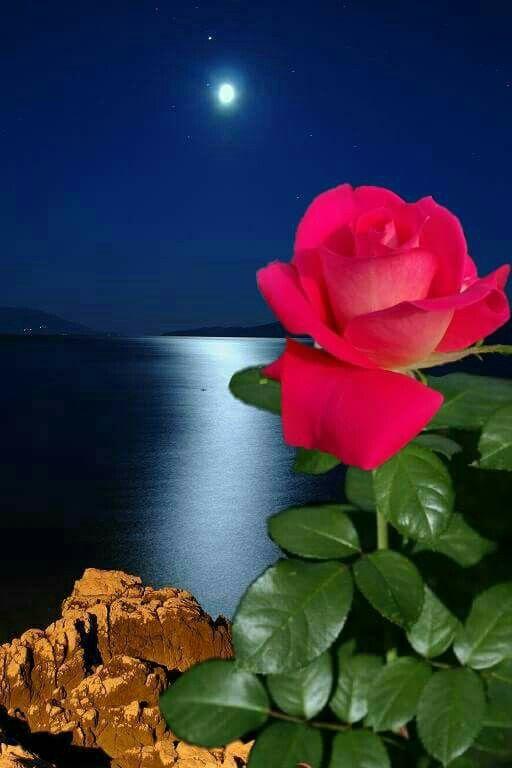 So Gorgeous Good Night Flowers Amazing Nature Photos Beautiful Moon Images