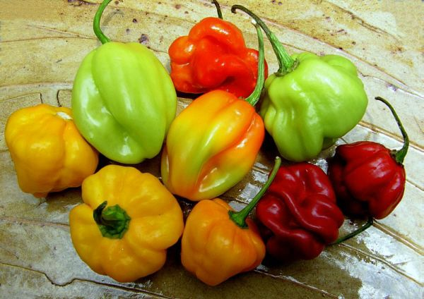 Colorful Stuffed Peppers Peppers Recipes Jamaican Cuisine