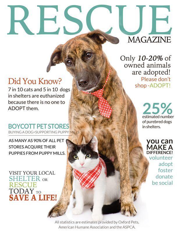 Animal Rescue Marketing Inspiration Adopt Foster