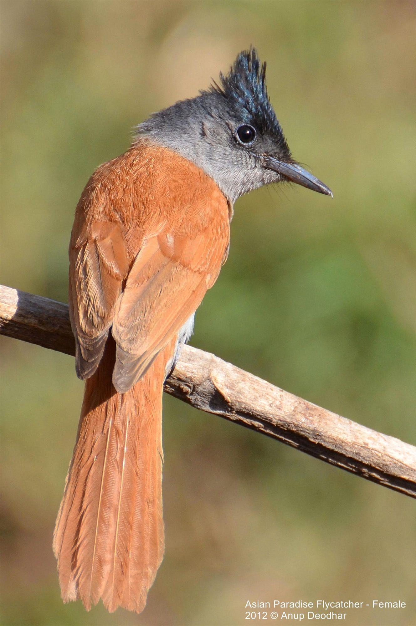 Pin on Beautiful birds