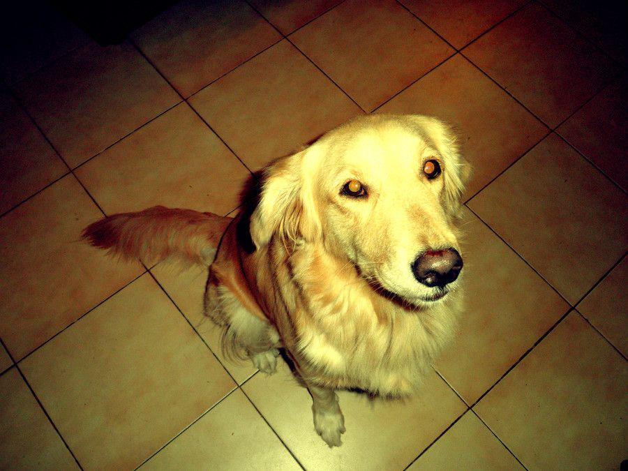 Doggy by Leonardo Valenzuela on 500px