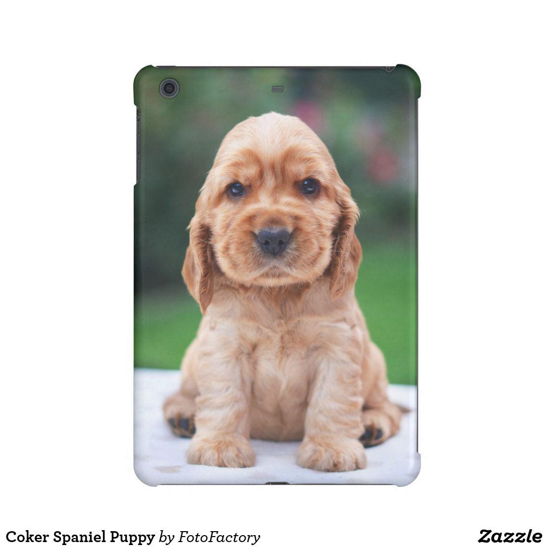 Coker Spaniel Puppy Ipad Mini Cover Zazzle Com Spaniel Puppies Puppies Cat Illnesses