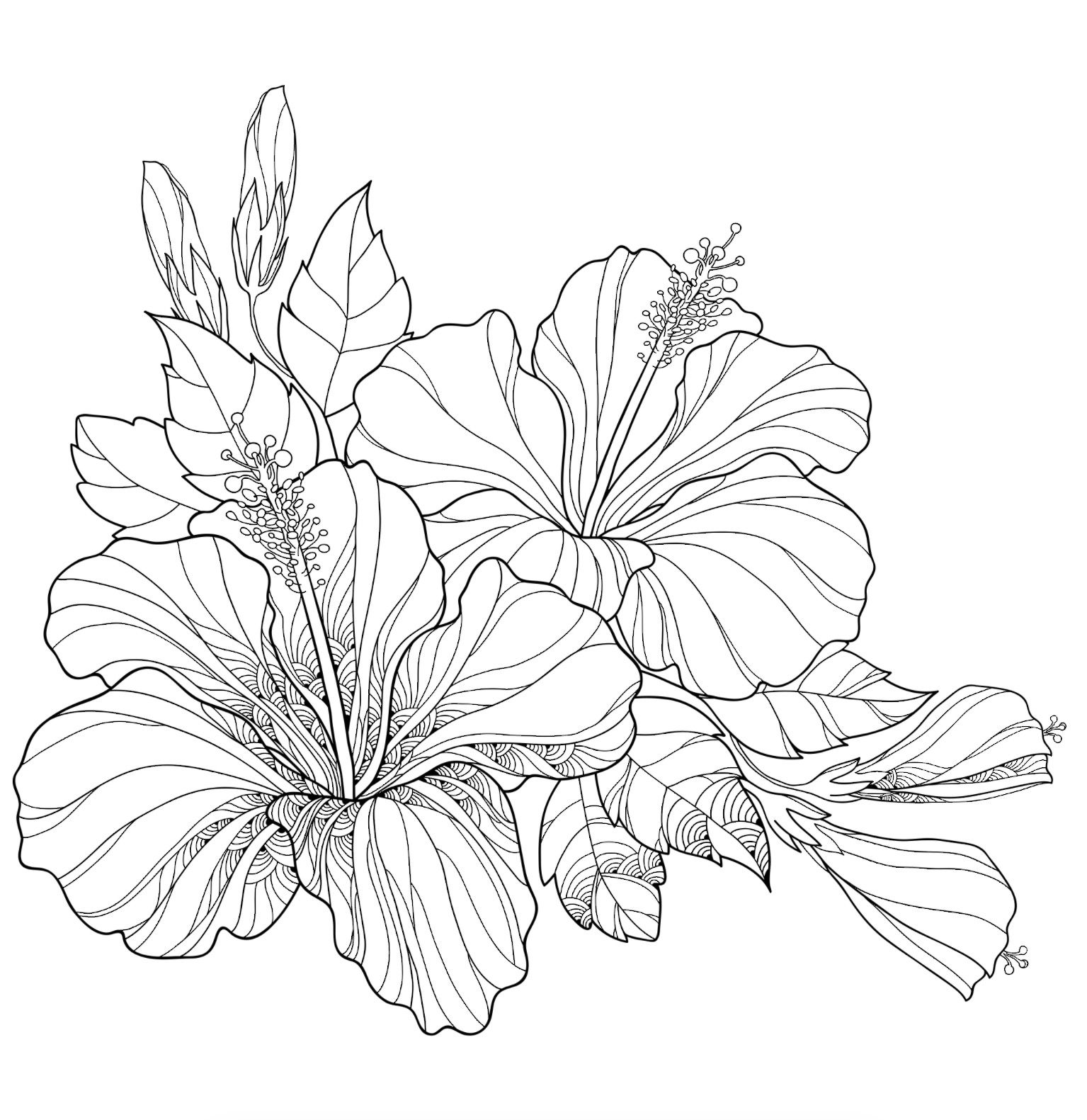 Pin By Althea On Flora With Images Flower Line Drawings