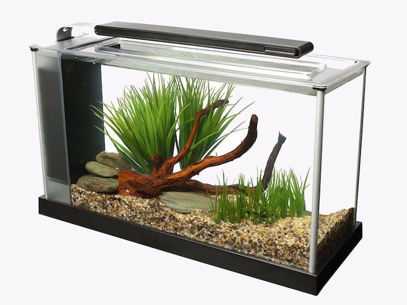 How To Get Rid Of Bacterial Bloom In Freshwater