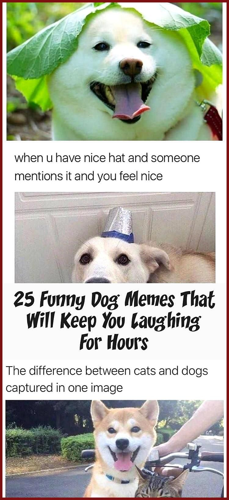 25 Funny Dog Memes That Will Keep You Laughing For Hours The Best Dog Memes Of 2019 By Small Animals Enjoy The Funny Dogs Funny Dog Memes Dog Memes Funny Dogs