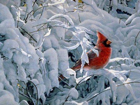 Winter with Cardinal - snow, tree, cold, cardinal, winter.
