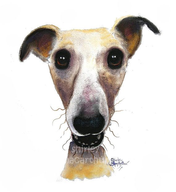 Hollywolly By Shirley Macarthur From The Nosey Dog Paintings
