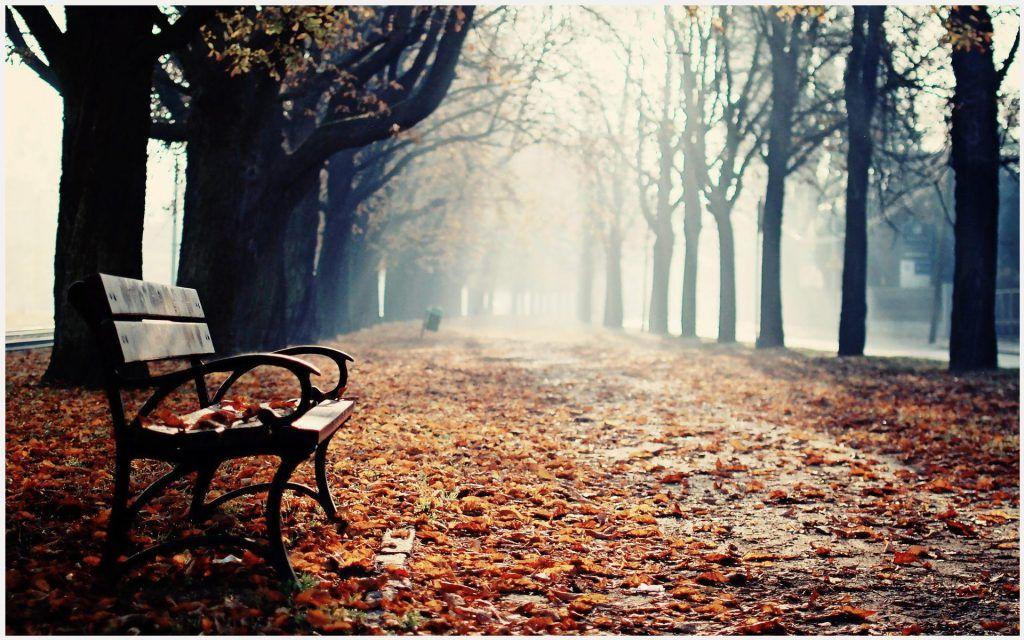 Winter Park Bench Hd Wallpaper Winter Park Bench Hd Wallpaper