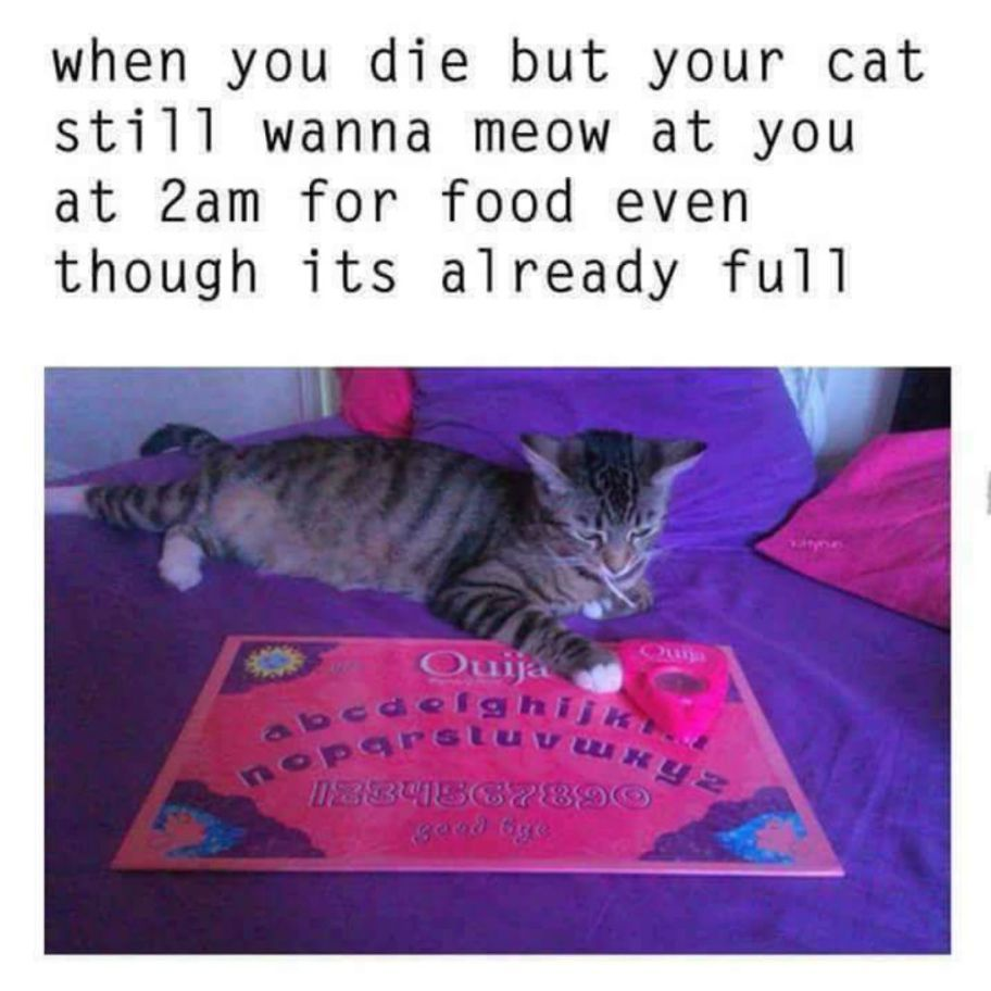 100 Funniest Cat Memes Ever