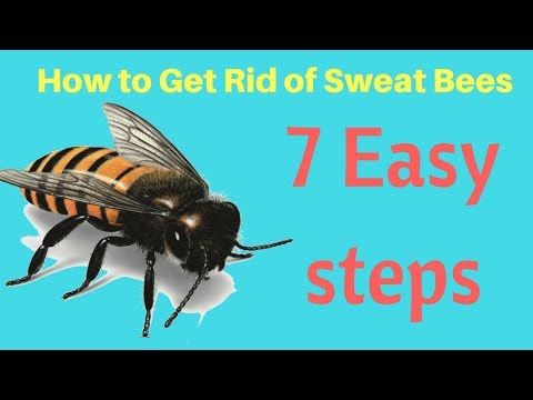 How To Get Rid Of Sweat Bees In Yard Without Professional Help Fast Ea Sweat Bees Bee Repellent Bee Traps