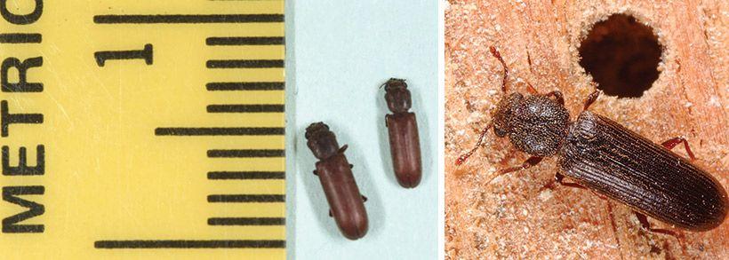 Carpet Beetles In Kitchen Cabinets - Iwn Kitchen