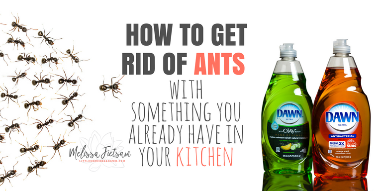 How To Get Rid Of Ants With Something You Already Have In Your