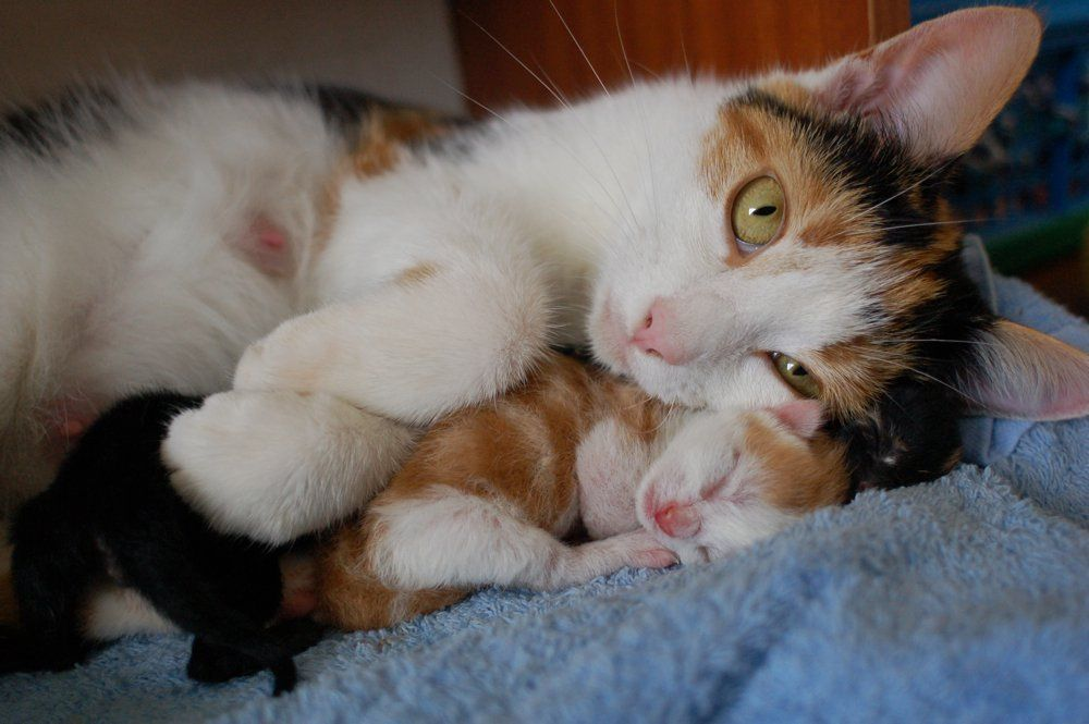 My Cat Snuggling Her Day Old Kittens Cats And Kittens Cute