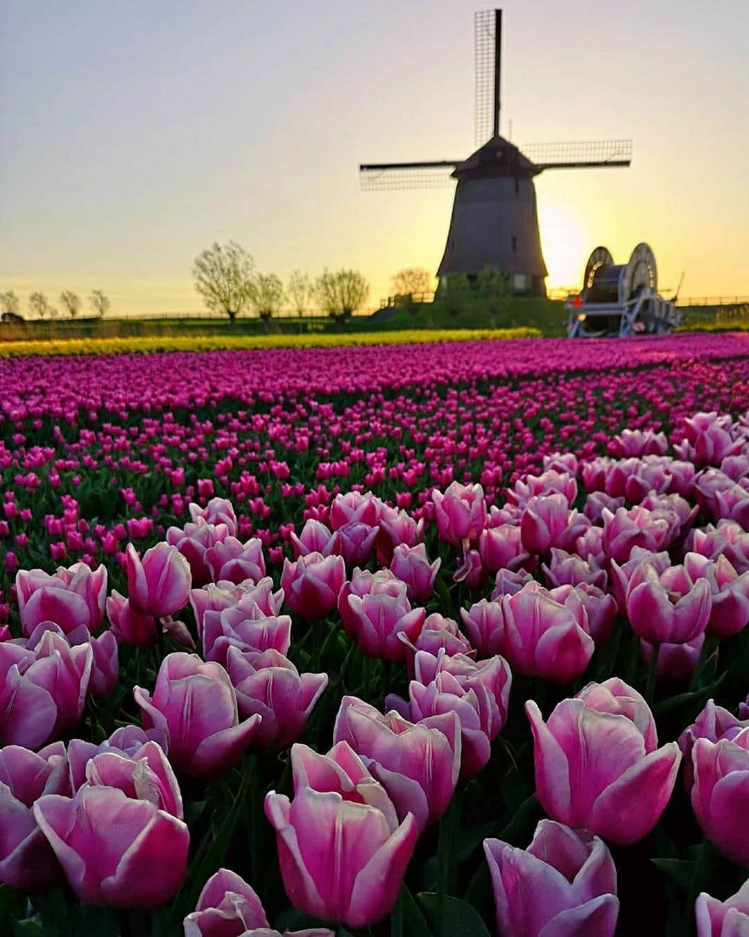 Top 10 Tourist Attraction To Visit in Netherlands in 2020
