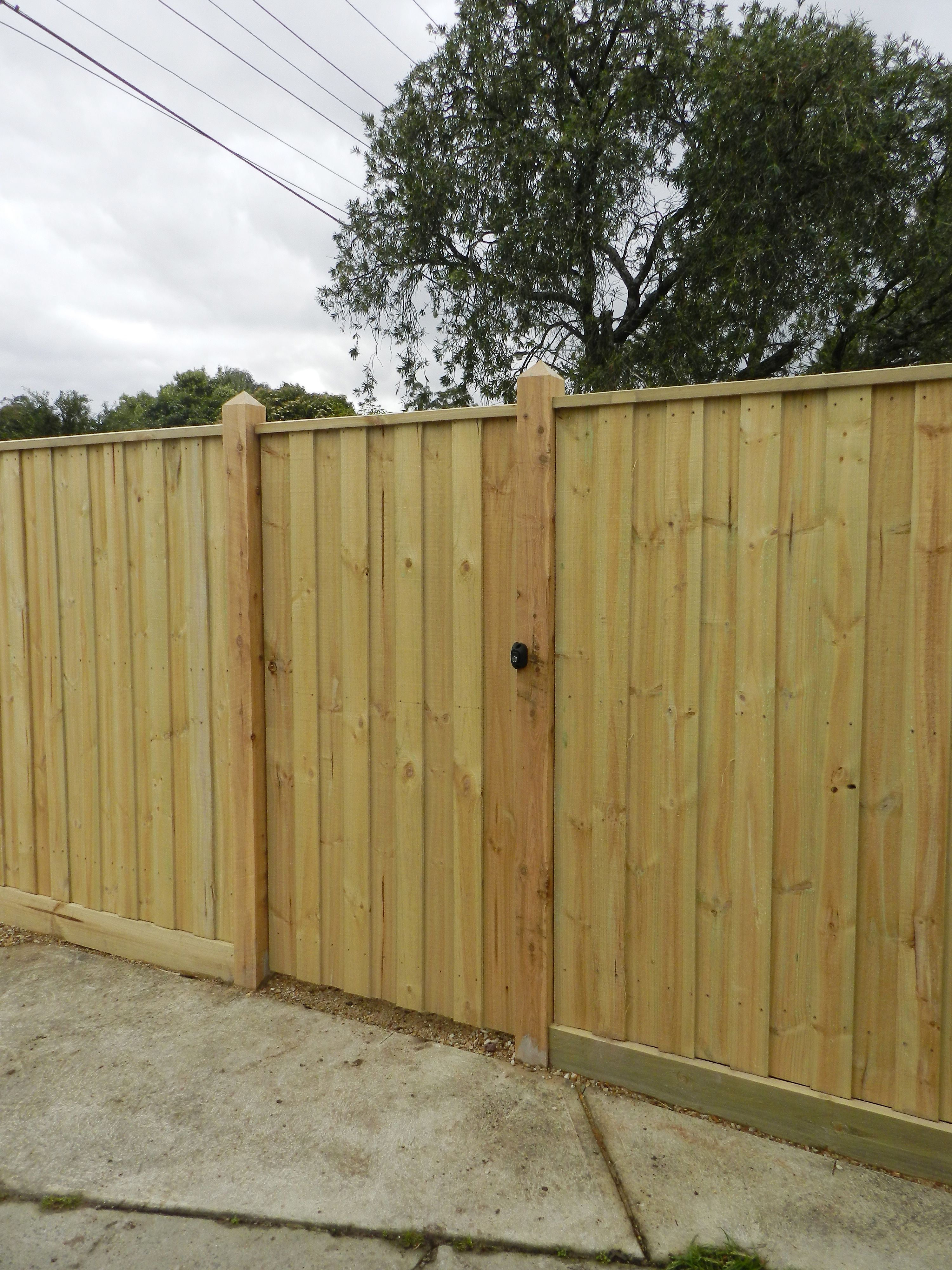 Timber Fencing: Treated Pine Paling - Eastside Fencing