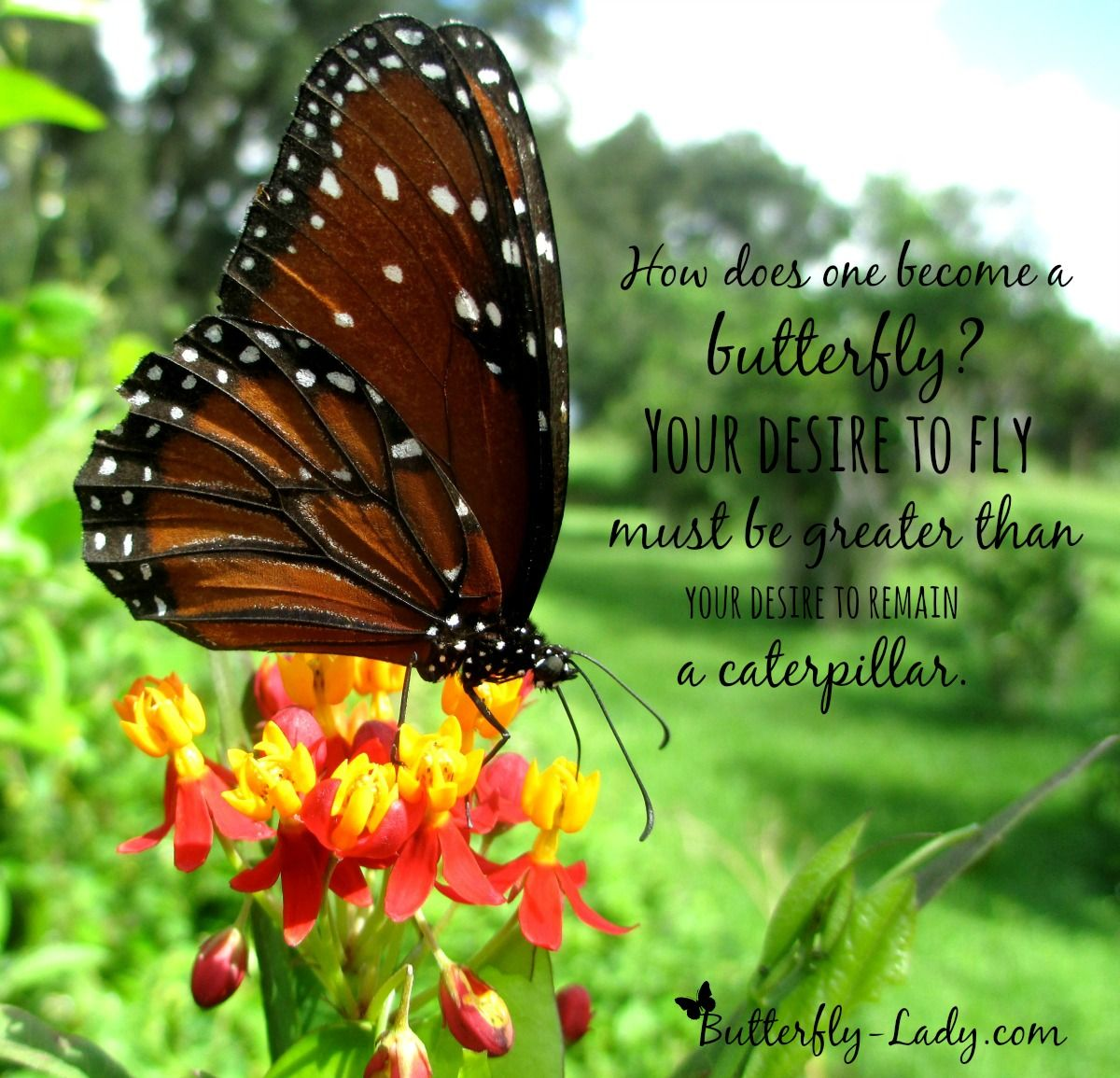Pin by Butterfly Lady on Butterfly Inspiration Butterfly