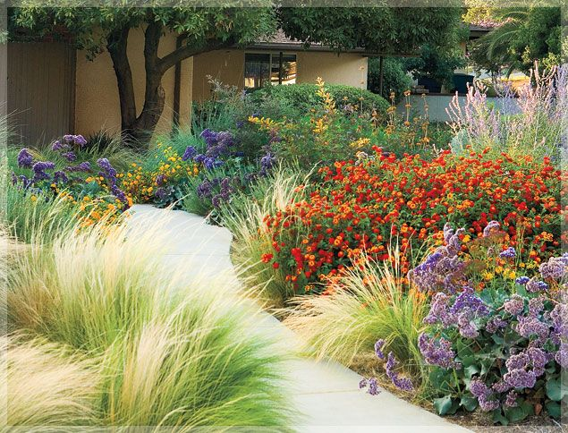 southern california garden with orange lantana grasses taller shrubs use white rapheolepsis and purples add bearded iris and orange flower succulents - California Garden