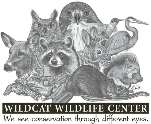 Wildcat Creek Wildlife Center- Rehabilitating Indiana Wildlife Since 1995