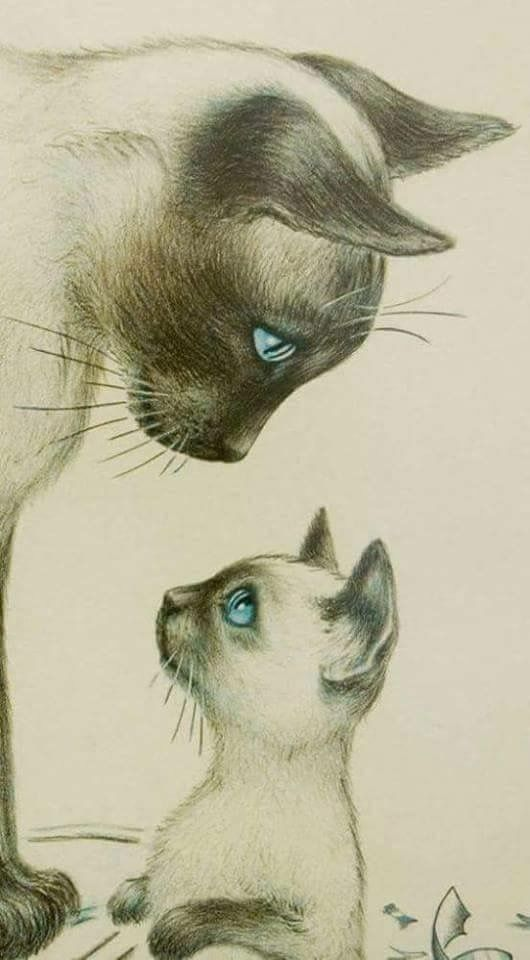 Discover Thousands Of Images About White Cat Charcoal Drawing Was Looking For Tattoos But I Couldnt Resist The Beauty
