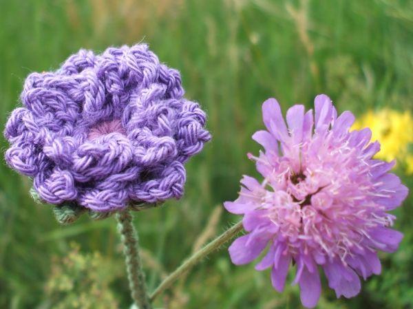 Knopfblume Knautia Häkeln Häkeln Blumen Häkeln Und Häkeln Crochet