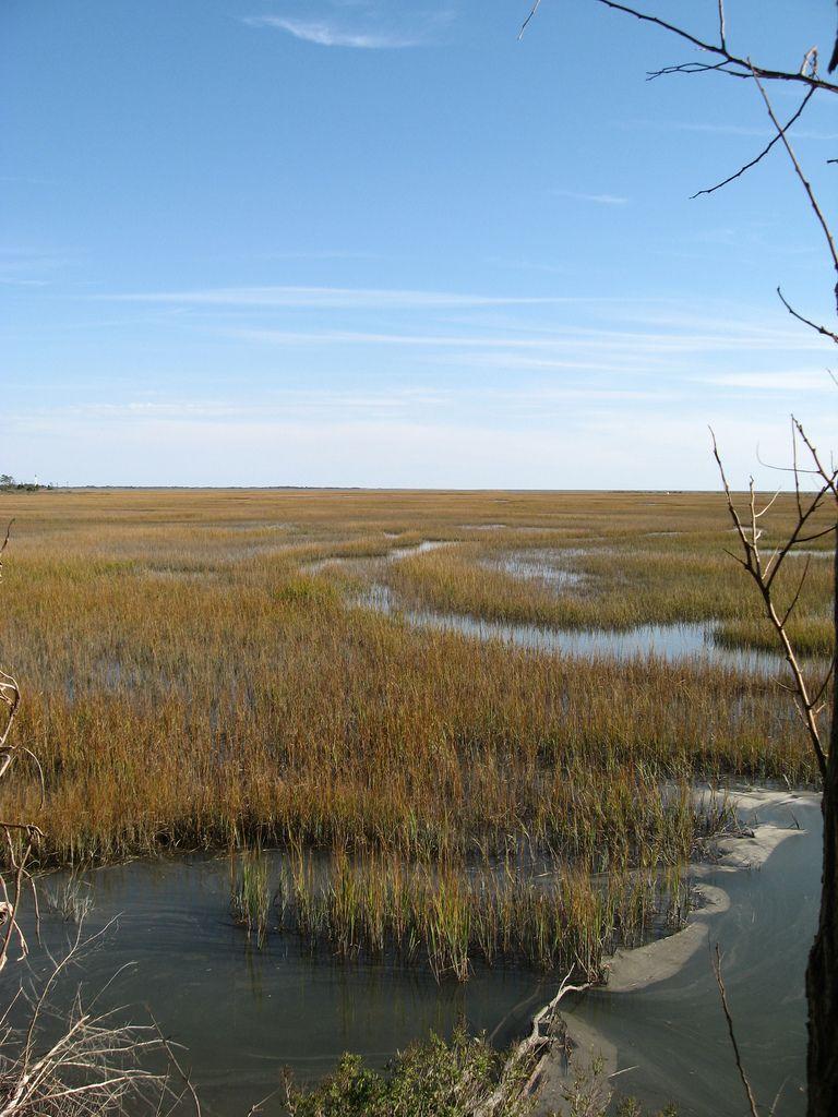 Salt marsh in 2019 Salt marsh, River park