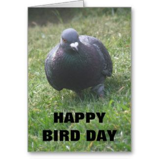 Posing pigeon custom birthday card images pinterest gift posing pigeon custom birthday card bookmarktalkfo Images