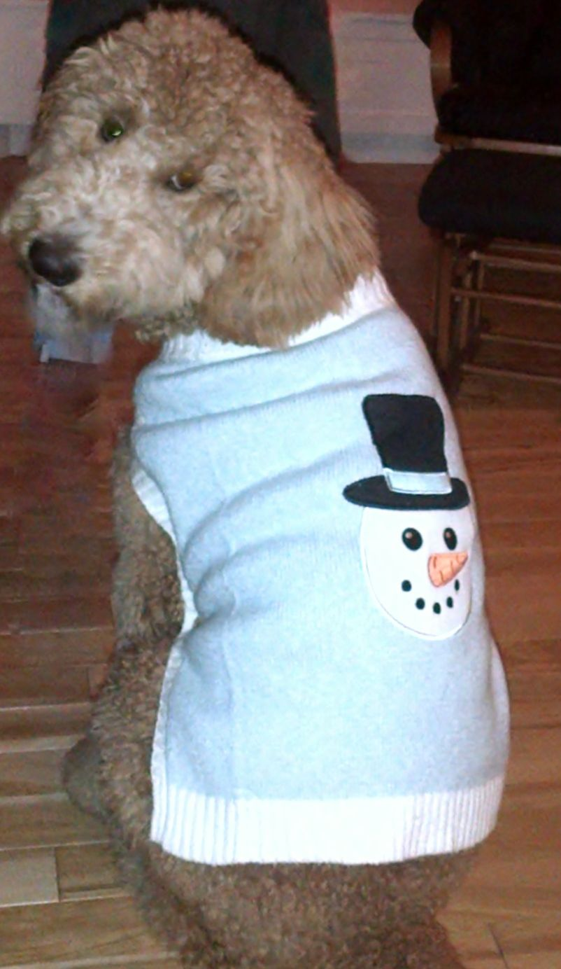 Christmas snowman sweater from Petsmart so cute