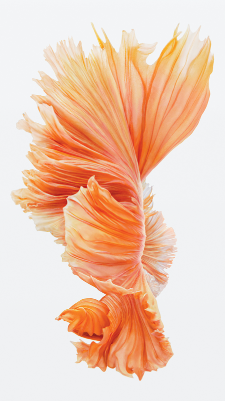 Get The Beautiful Live Wallpapers From Iphone 6s As Still