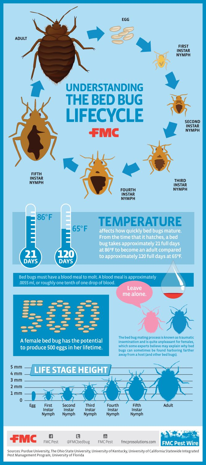 Image result for bed bugs infographic Bed bugs, Bugs