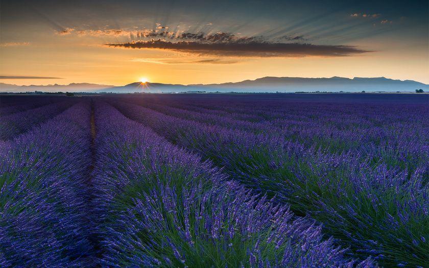 франция, лето, поле, июнь, прованс
