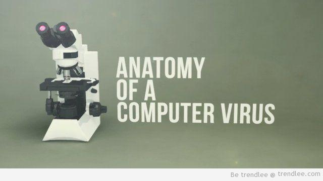 Anatomy of a Computer Virus