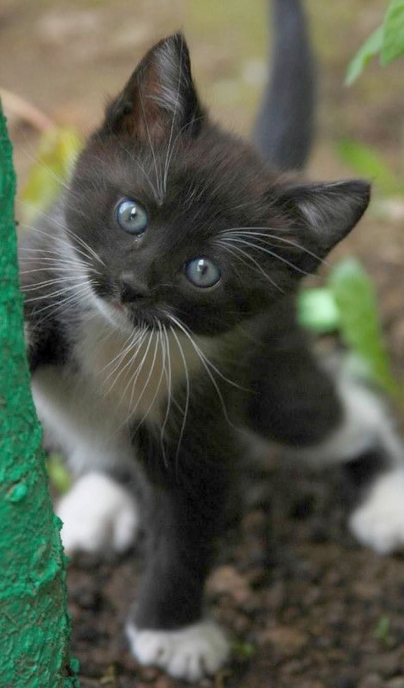 Cats And Kittens Northern Ireland Cats And Kittens Food Kittens Cutest Pretty Cats Cute Cats
